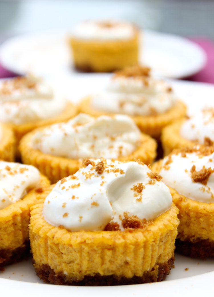 Miniature Pumpkin Gingersnap Cheesecakes- the dessert of the season? I think yes. #cheesecake #pumpkin #fall